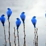 Los mundos de twitter
